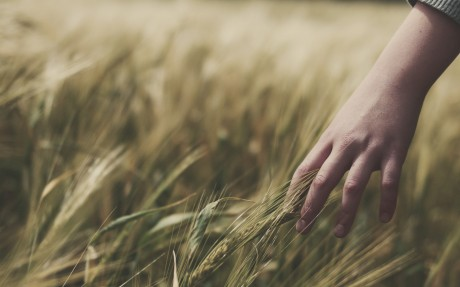 close-up-of-baby-girl-hand-touching-crops-of-wheat-on-the-field-feeling-nature