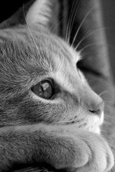gato-dor-1